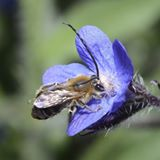 Hyménoptera, jardiner avec les insectes